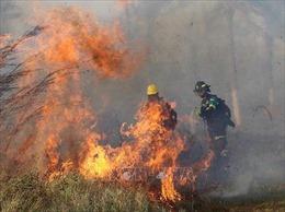 Cháy rừng vẫn tiếp tục lan rộng tại Bolivia