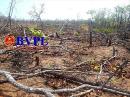 Gia Lai: Làm mất hơn 550 ha rừng, chi sai hơn 900 triệu đồng