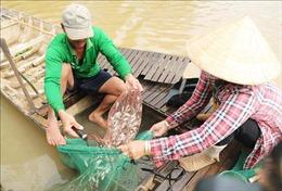 Nhiều hy vọng cho nông dân đầu nguồn trong mùa nước nổi