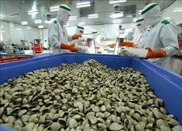 Trung Quốc mở cửa thị trường với ngao hoa, ngao trắng và nghêu lụa của Việt Nam