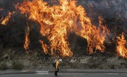 Khống chế được gần 50% đám cháy rừng lớn nhất tại Nam California