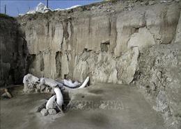 Mexico phát hiện hóa thạch xương voi ma mút nhiều nhất từ trước đến nay