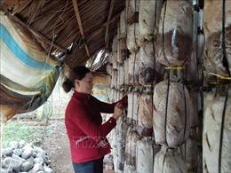 Thoát nghèo bền vững để vươn lên làm giàu từ nghề trồng nấm