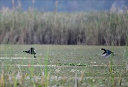 Nâng cao nhận thức về bảo tồn, sử dụng 'khôn khéo' các vùng đất ngập nước