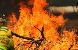 Thêm 240.000 người dân được yêu cầu sơ tán do cháy rừng ở Australia