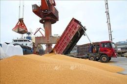 Kỳ vọng Trung Quốc tăng mạnh nhập khẩu nông sản Mỹ giảm dần