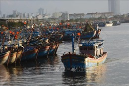 Đà Nẵng thực hiện nghiêm việc quản lý nhà nước trong thực hiện Luật Thủy sản