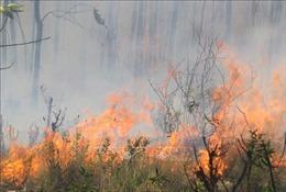 Nguy cơ cháy rừng ở Bình Thuận ở mức cực kỳ nguy hiểm