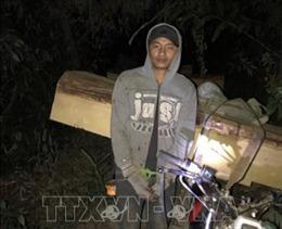 Kon Tum: Bắt quả tang vụ khai thác rừng trái phép