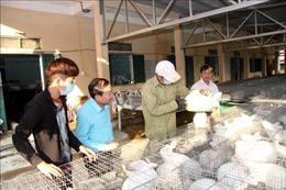 Hiệu quả kinh tế cao từ nuôi thỏ New Zealand