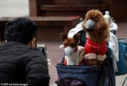 Hong Kong (Trung Quốc) xác nhận về trường hợp thú nuôi nhiễm SARS-CoV-2