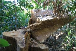 Phát hiện vụ khai thác gỗ trái phép ở khu vực biên giới Quảng Trị