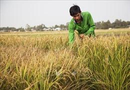 Nhân Ngày thành lập Đoàn 26/3: Khởi nghiệp từ niềm đam mê nông sản sạch