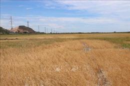 Chuyển mục đích sử dụng đất trồng lúa tại Hà Nam và Hải Dương