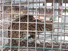 Cấm buôn bán động vật hoang dã để giảm nguy cơ xảy ra đại dịch trong tương lai