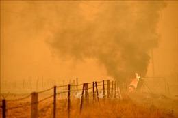 Cháy rừng gần đây tại Australia thải 830 triệu tấn CO2 vào khí quyển
