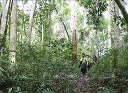 Áp lực giữ rừng ở Tây Nguyên - Bài 3: Nhiều thách thức trong giữ rừng tự nhiên