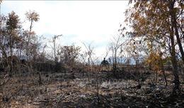 Khánh Hòa: 67.000 ha rừng nằm trong nguy cơ cháy cao giữa mùa khô hạn