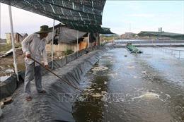 Hiệu quả từ mô hình chuyển đổi từ ruộng muối sang nuôi tôm