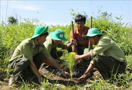 Tập trung trồng rừng trên đất lâm nghiệpsau giải tỏa