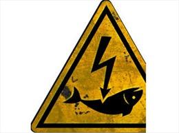 Ngăn chặn đánh bắt thủy sản bằng xung điện
