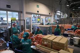 Doanh nghiệp Việt tại LB Nga vượt qua 'cơn bão' COVID-19