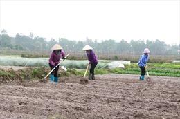 Quảng Ninh sẽ chuyển đổi hơn 3.200 đất lúa kém hiệu quả