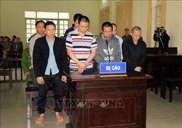 Xét xử 7 bị cáo vụ hạ độc hơn 3.400 cây thông ở Lâm Đồng