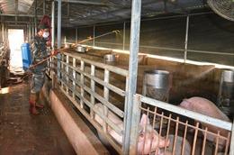 Quảng Ninh chỉ tái đàn ở những cơ sở chăn nuôi an toàn