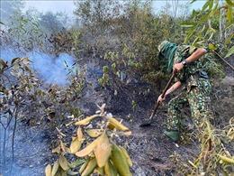 Cơ bản khống chế được cháy rừng tại núi Hầm Vàng ở Đà Nẵng