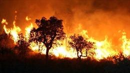 Tổng thốngAlgeria yêu cầu điều tra nguyên nhân cháy hơn 8.000 ha rừng