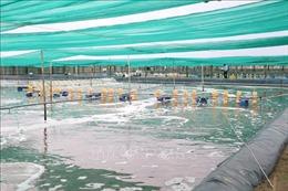Khai thác hiệu quả tiềm năng kinh tế thủy sản