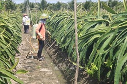 Phát triển bền vững các vùng chuyên canh - Bài 1: Đa dạng vùng trồng