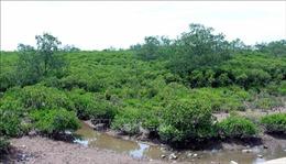 Đất ngập nước chống biến đổi khí hậu - Bài 1: Tấm lá chắn bảo vệ bờ biển