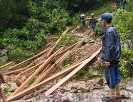 Vận chuyển toàn bộ số gỗ do 'lâm tặc' để lại ra khỏi rừng phòng hộ ở Quảng Ngãi