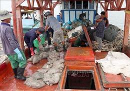Cà Mau nâng cao hiệu quả công tác phòng, chống khai thác hải sản bất hợp pháp