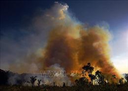 Brazil: Báo động tình trạng các vụ cháy rừng Amazon tăng mạnh