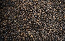 Xuất khẩu cà phê của Brazil tăng cao kỷ lục trong tháng 9
