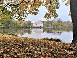 Mùa thu vàng ở 'Làng vua'St. Petersburg