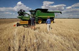 Tiềm năng mở rộng thương mại lúa mạch giữa Việt Nam - Australia