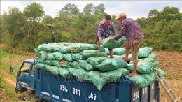 Hiệu quả từ nỗ lực giảm nghèo nơi vùng cao biên giới