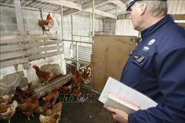 Pháp, Đan Mạch tăng cường biện pháp ngăn chặn dịch cúm gia cầm
