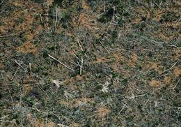 Khi con người gắn bó với hệ sinh thái rừng