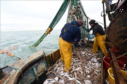 WTO không đạt được thỏa thuận cắt giảm trợ cấp đánh bắt cá trước thời hạn chót