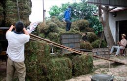 Thạch đen Tràng Định trước cơ hội xuất khẩu chính ngạch