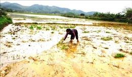 Nông dân Quảng Bình gặp khó khi ruộng bị đất, đá bồi lấp