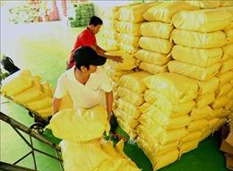 Nhân rộng mô hình liên kết sản xuất, tiêu thụ lúa gạo hàng hóa