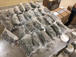 Triệt phá vụ vận chuyển trái phép 4,72 kg cần sa từ Canada về Việt Nam