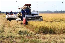 Ứng dụng công nghệ thông minh vào sản xuất lúa cho hiệu quả cao