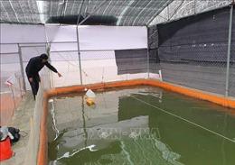 Các địa phương tăng cường phòng chống rét cho cây trồng, thủy sản